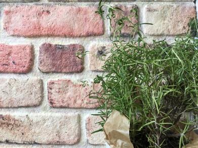 Impressionen: Mauerwerk und Rosmarin