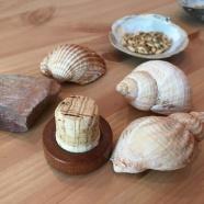 Impressionen: Muscheln, Steine, Korken und Samen