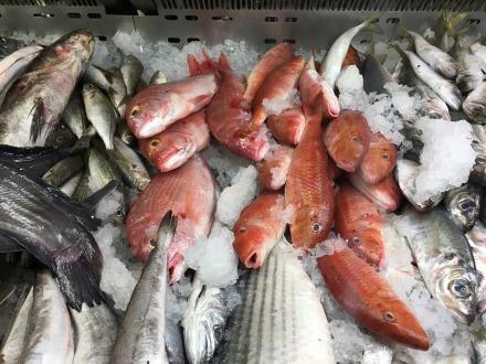 Die große Fischauswahl