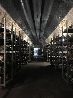 Kaum zu glauben: Auf ca. 300qm werden unter dem Bieberer-Berg Pilze gezüchtet.