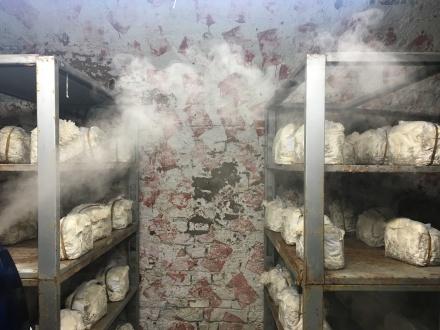 Ich suche einen feuchten Keller: Die perfekte Umgebung für Friseepilze.