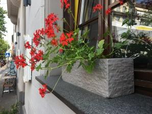 Blumen gehören einfach mit zum Erscheinungsbild und machen den Kiez etwas bunter.