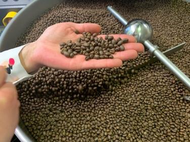 Justyna bei der Auslese. Zu helle Kaffeebohnen oder gar kleine Steinchen, die sich manchmal zwischen den gerösteten Kaffeebohnen verstecken, fallen ihr sofort ins Auge.