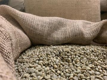 Rohe (noch grüne) Kaffeebohnen!