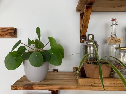Grünpflanzen gehören zum Erscheinungsbild des My Piecycles!